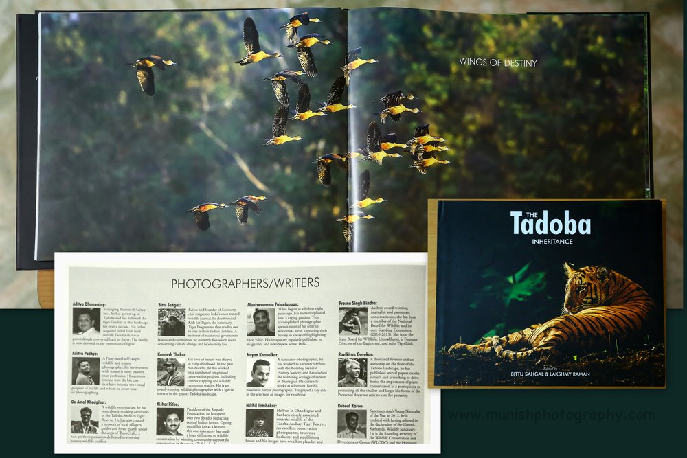 A Double Spread in Prestigious Sanctuary Asia Tadoba Inheritance Coffee Table book