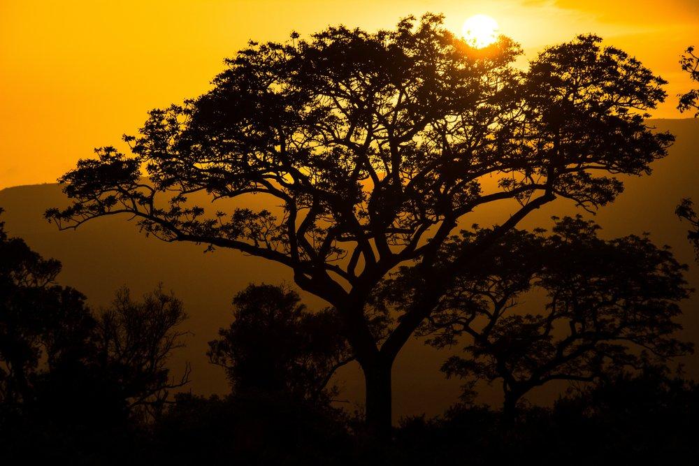 www.aainafrica.com