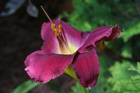Camprini Garden Bloom
