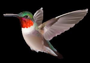 Club Bird - Hummingbird