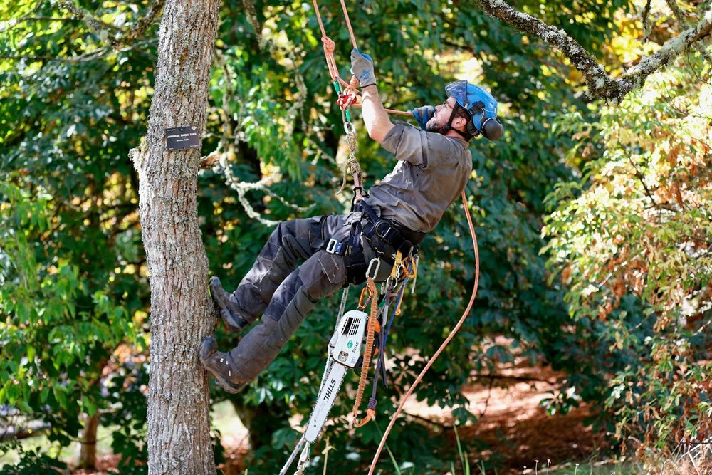 Eric in the Raisin Tree.jpg