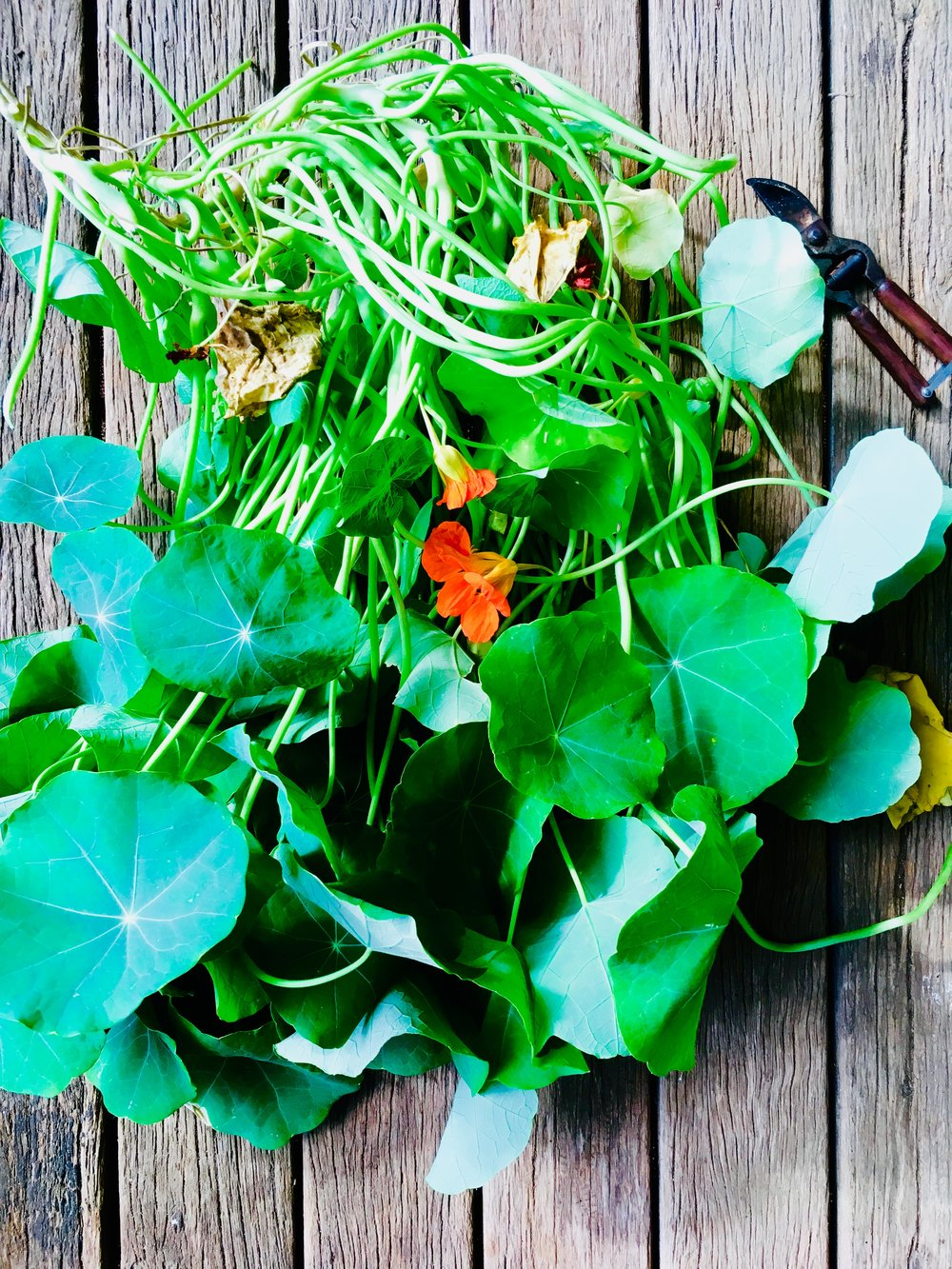 nasturtium-leaves.jpg