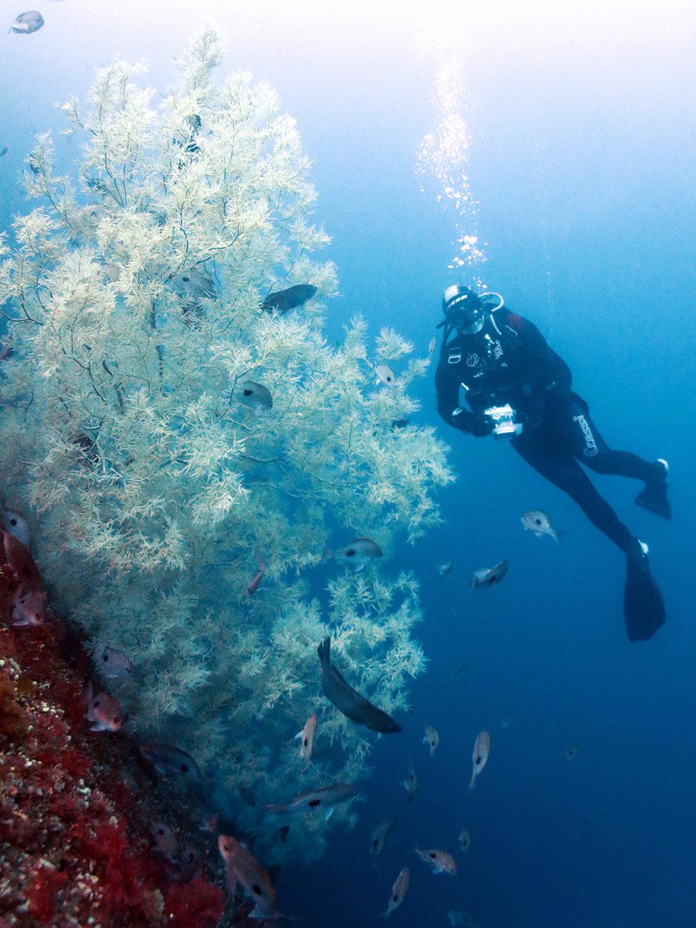 Black Coral 1080.jpg