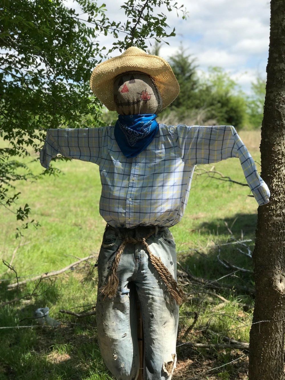 gate scarecrow.JPG