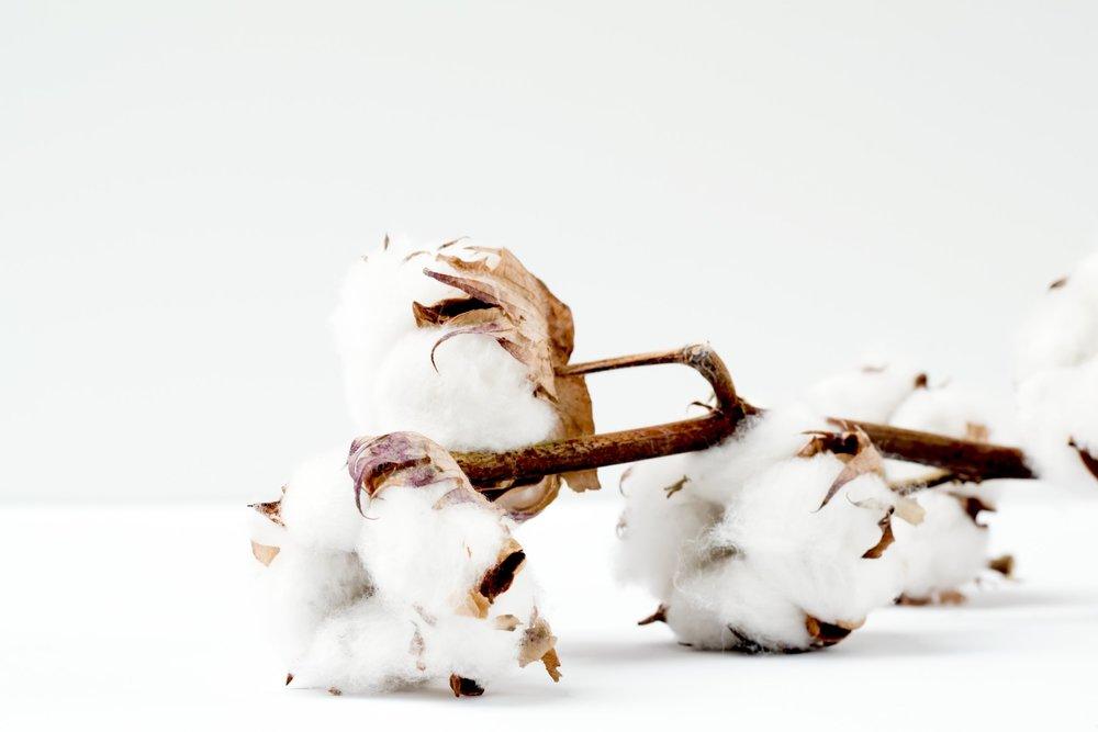 cotton unsplash.jpg