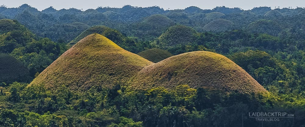 chocolate hill adventure in bohol island | philippines travel guide by LaidBackTrip