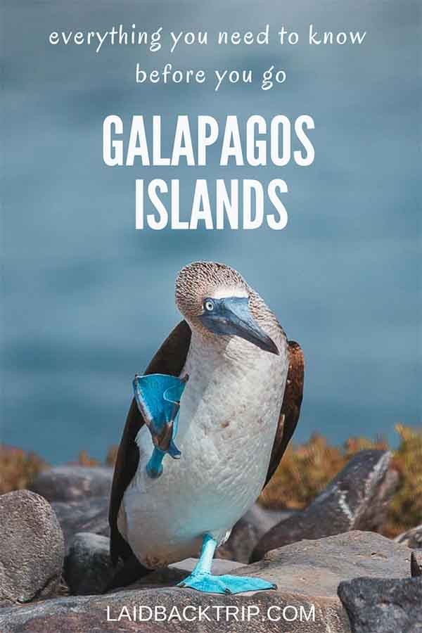 Galapagos Islands Tours
