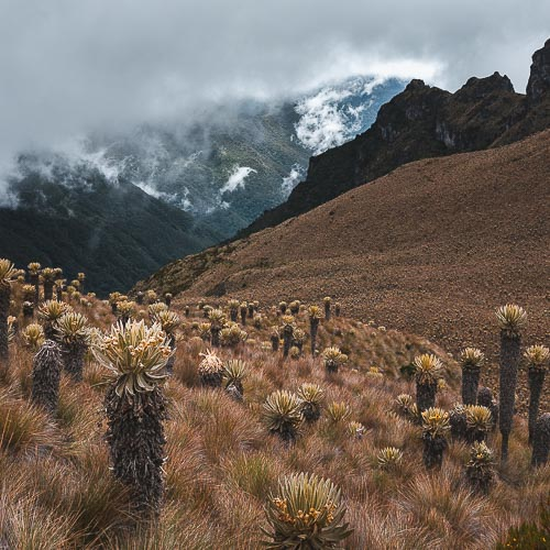 LOS NEVADOS NP - CLIMB THE VOLCANO AND GLACIER IN COLOMBIA