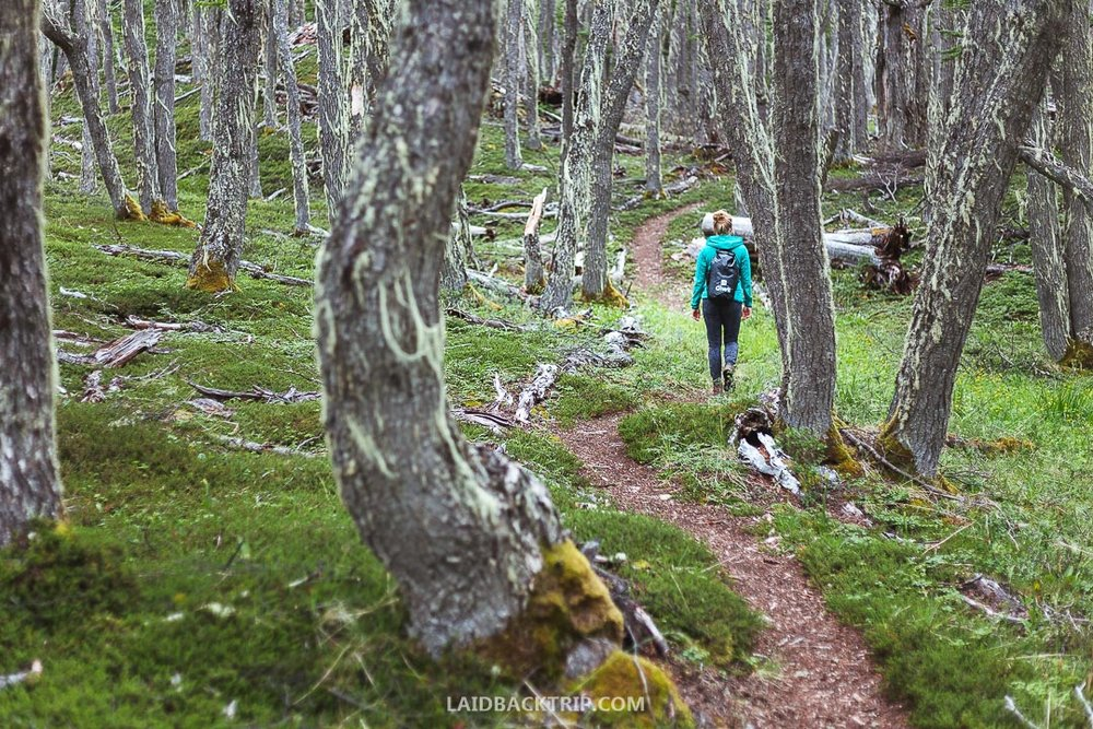 We've recently visited Patagonia National Park, and this is our complete travel guide.
