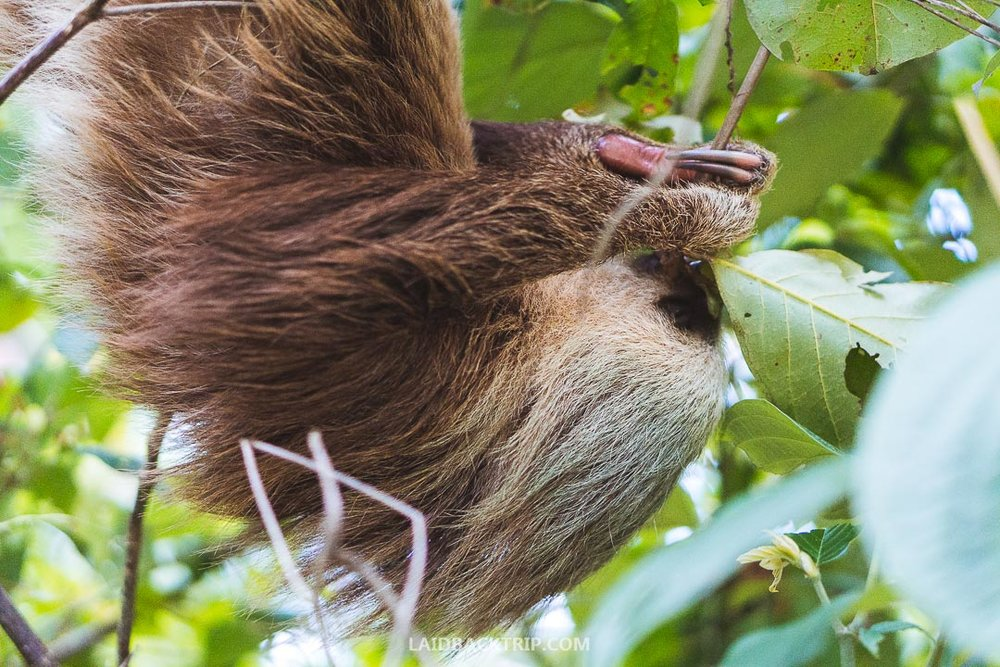 We saw plenty of birds and a few sloths while exploring Bocas del Toro.