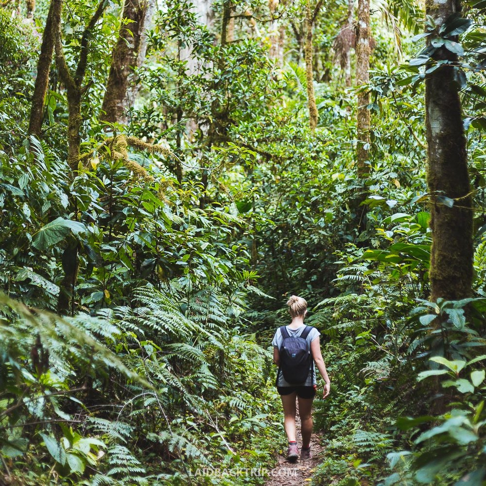 There are great hiking trails in Boquete, Panama.