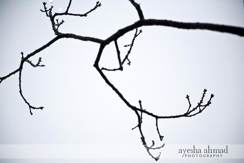Wintergreen2010-122