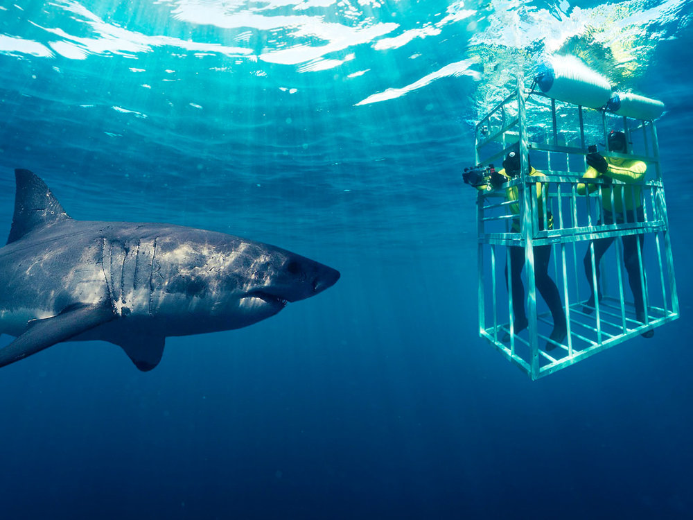 Shark-Cage-Diving-Cage.jpg