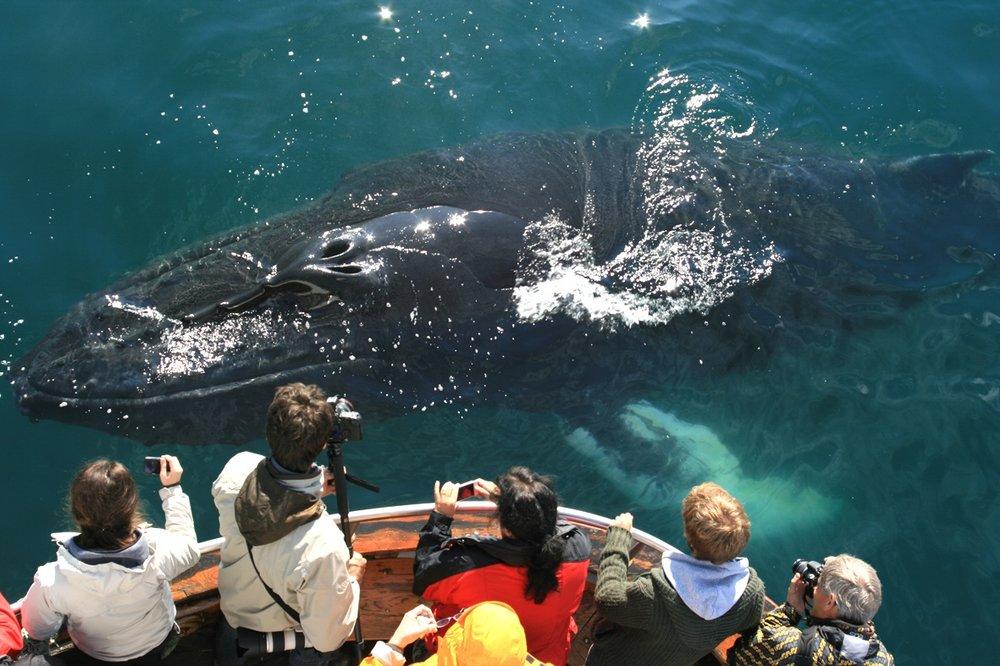 Whale-Watching-Dalvik-North-Iceland-9.jpg
