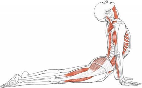 yoga-anatomy-continued-education-credits-photos-802557.jpg