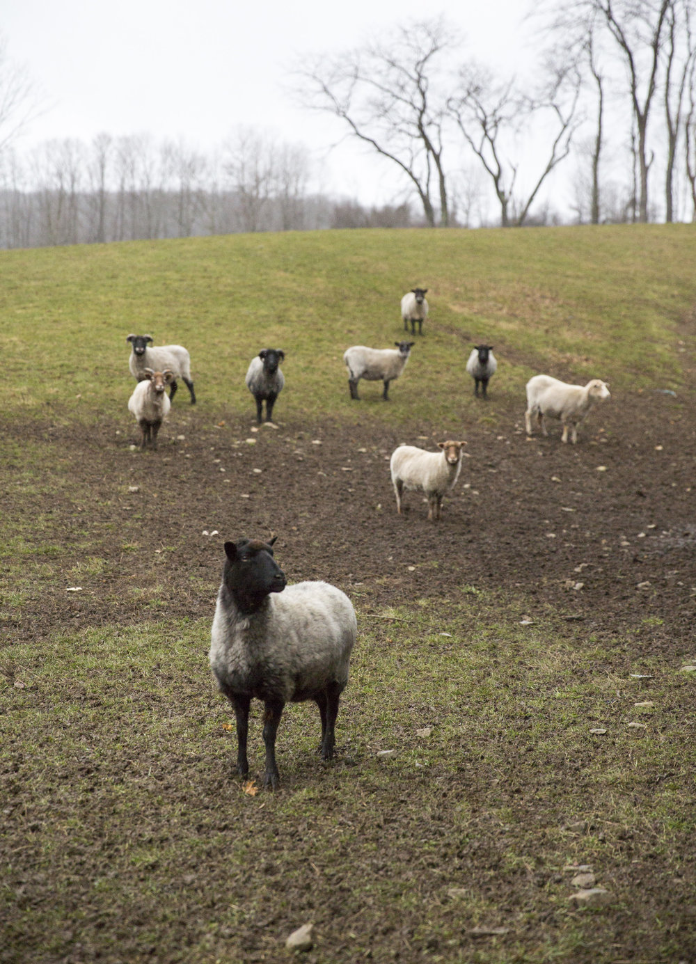 sheep_farmer_doumentary_photographer_beau_kester-19.jpg