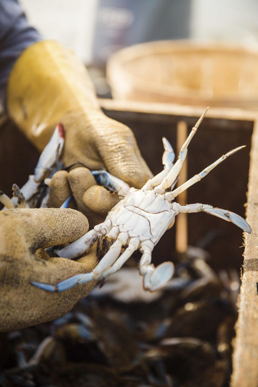 beau_kester_savannah_magazine_photographer_crab_lifestyle-6.jpg