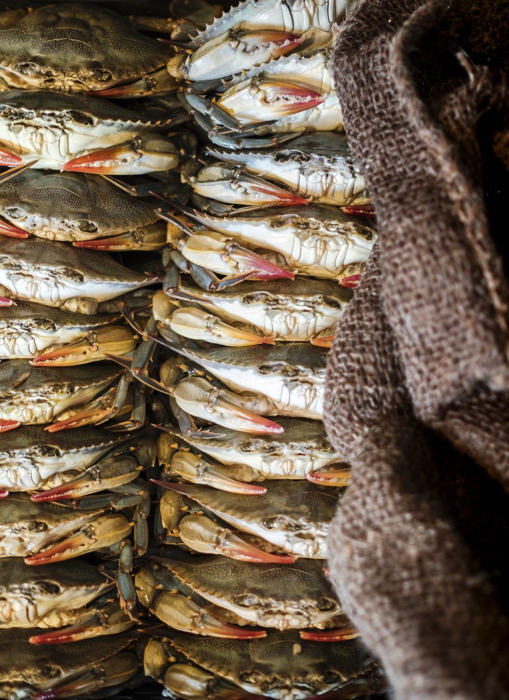 beau_kester_savannah_magazine_photographer_crab_lifestyle-25.jpg