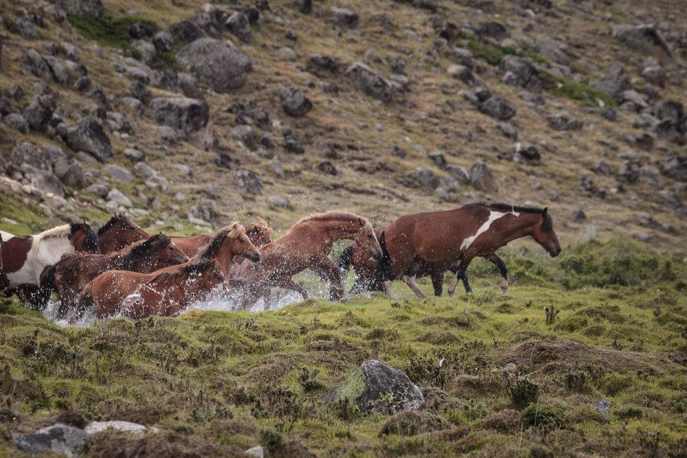 milking horses blog-0588.jpg