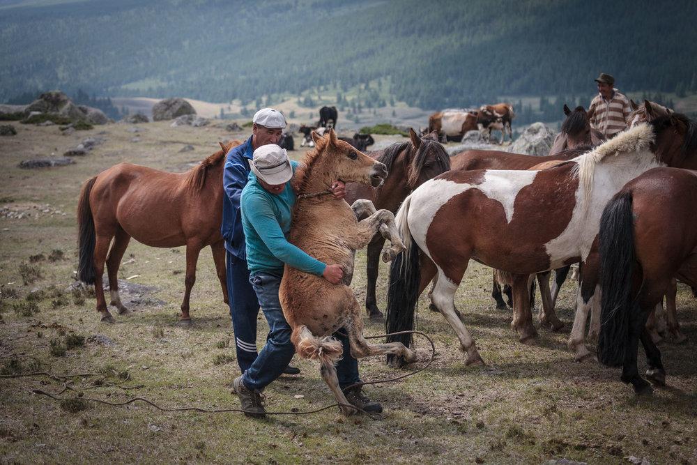 milking horses blog-0662.jpg