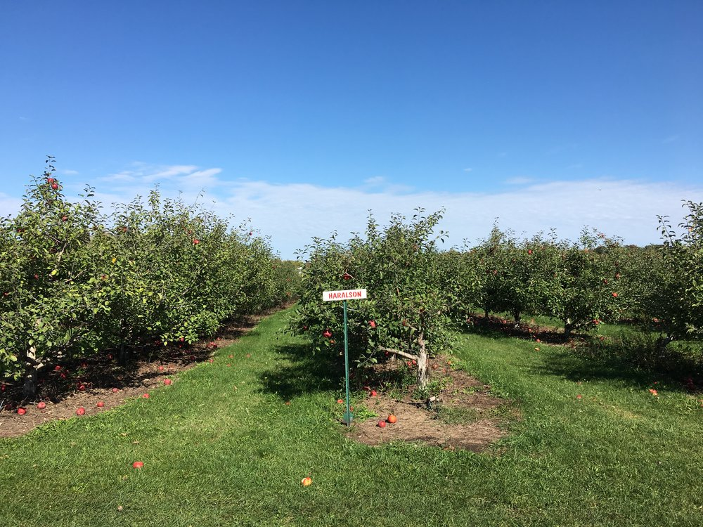 A trip to the apple orchard | Cassia & Co.