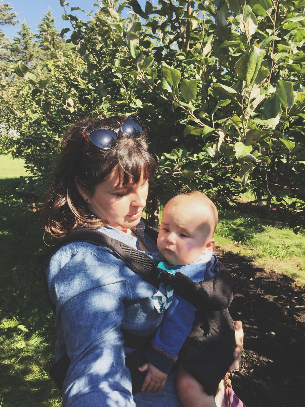 Apple Orchard | Cassia & Co.