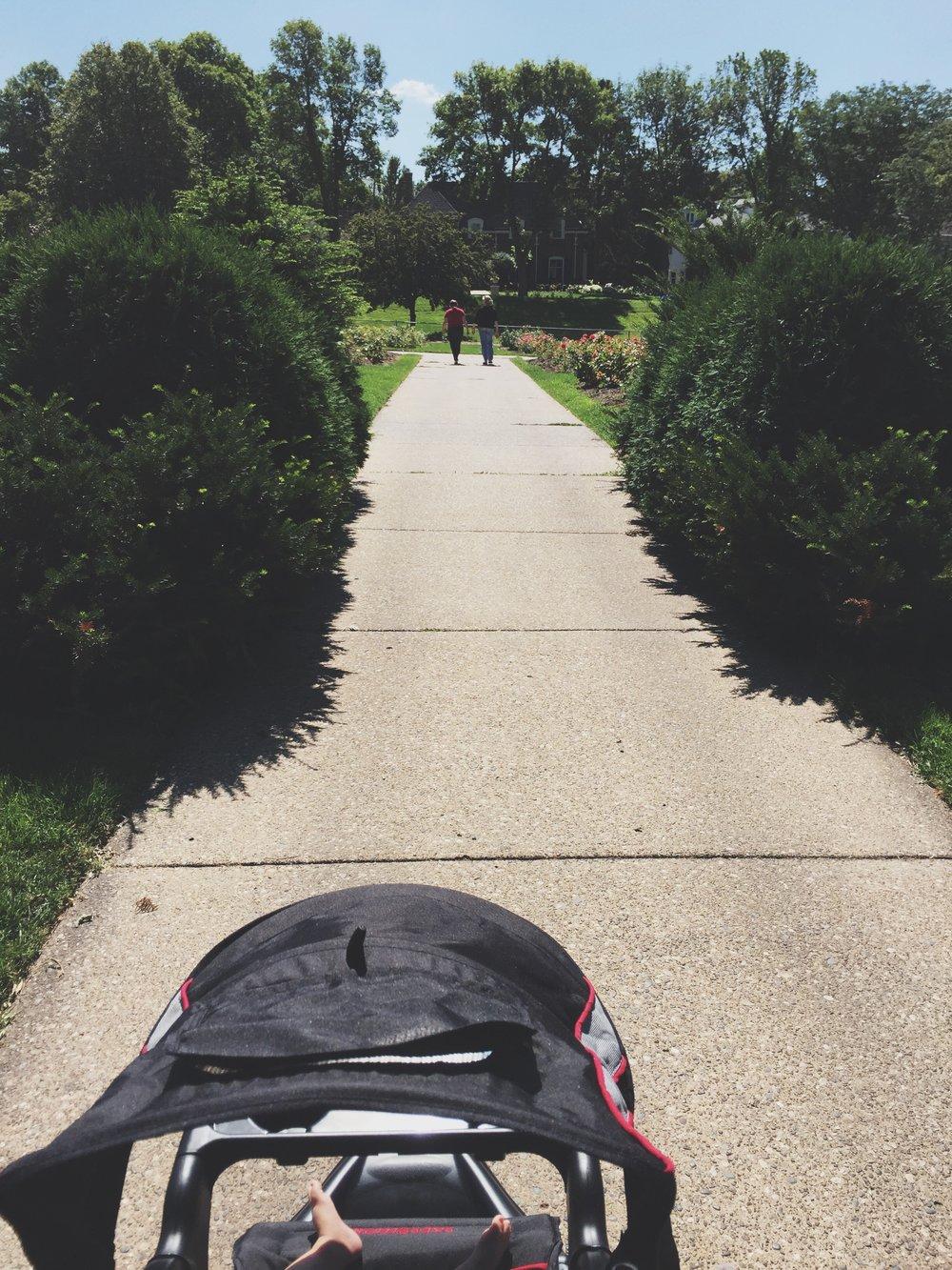 Walking to the rose garden