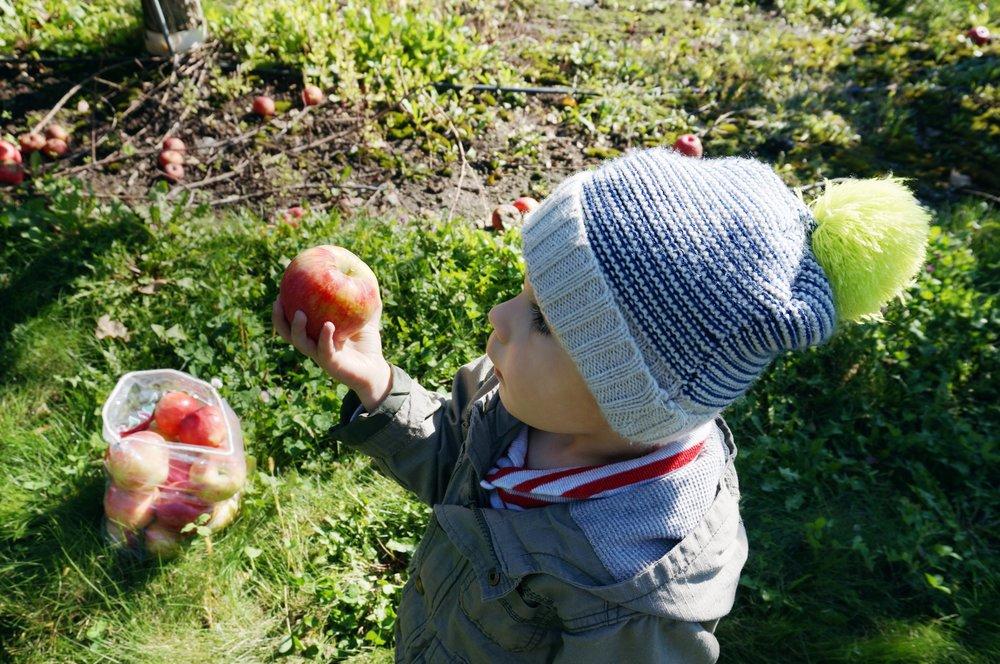 7 Finn with apple.jpg
