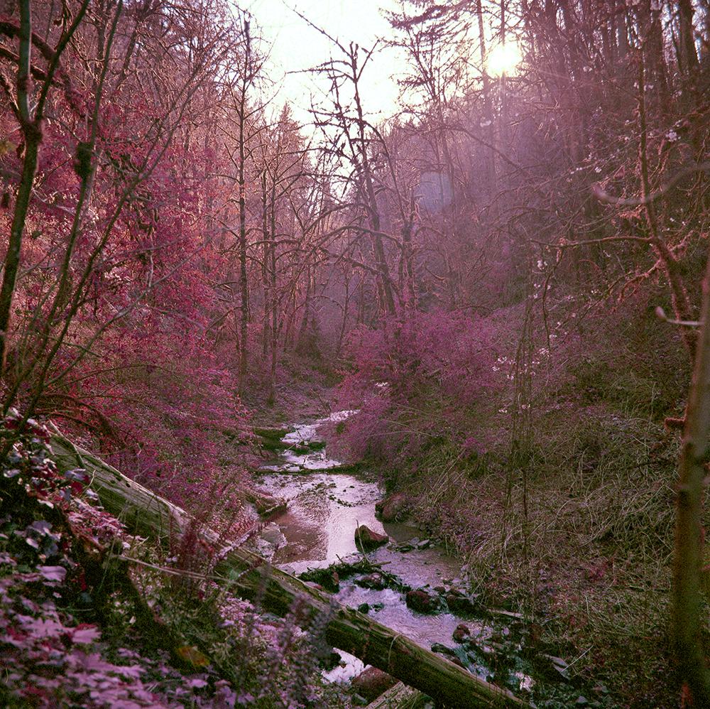 Shawn Kim - Trees, but pink