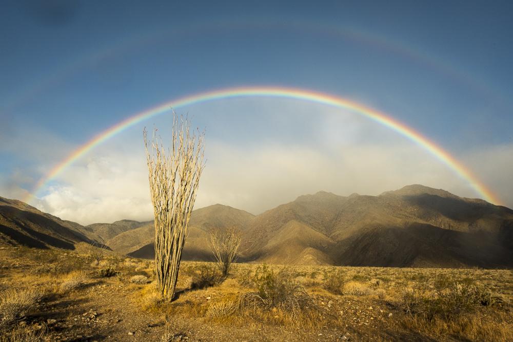 Borrego Rainbow