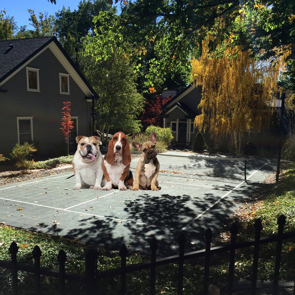 The Dogs play Pickleball
