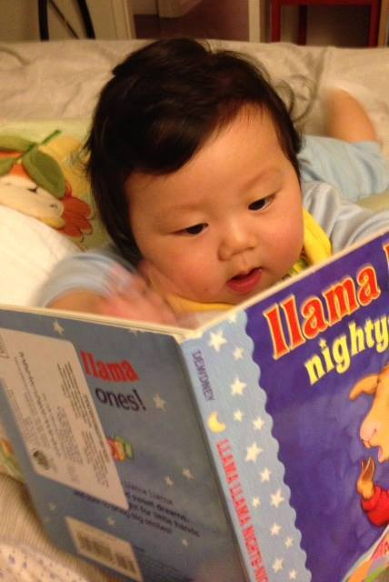 asian infant llama llama totally focused.jpg