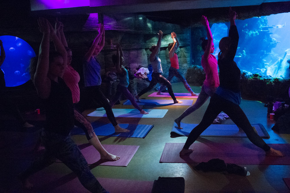 Fat Buddha Yoga held the first ever yoga class at the London Aquarium.