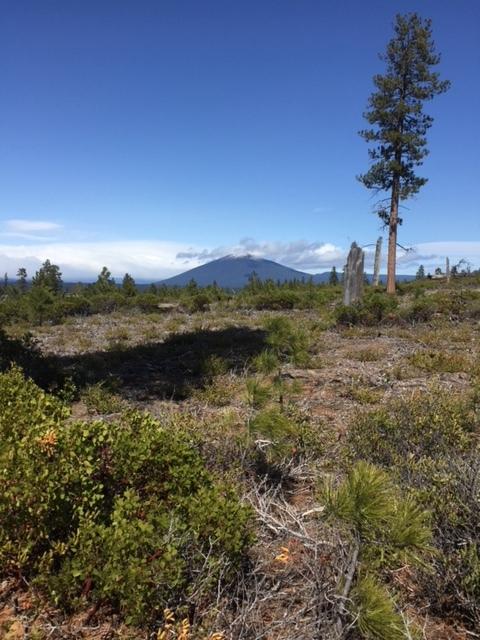 Black Butte from Metolius-Windigo Trail.JPG