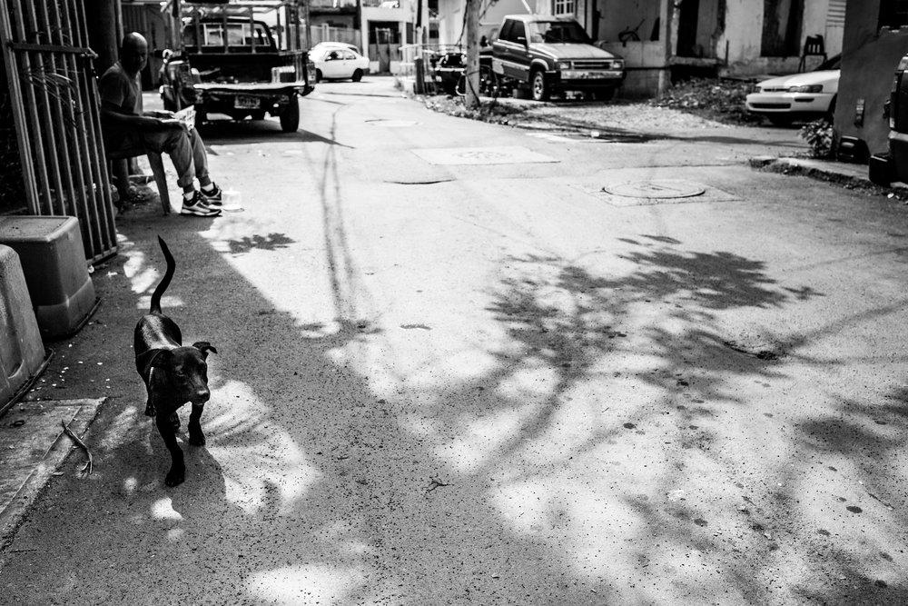 Shadows and dog