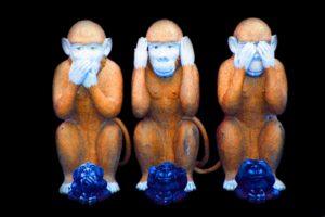 monkey-557586