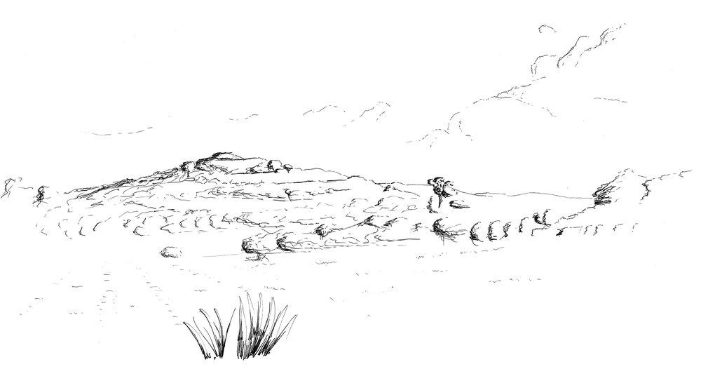 Top Knot Hill, Waiheke; ink