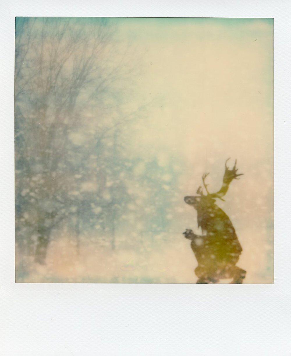 The Daimon Chroniles - Snowfall - Elk - Alan Marcheselli.jpg