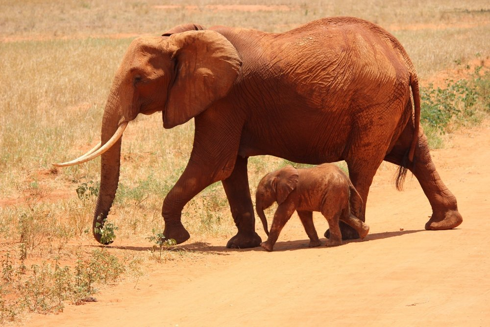 animals-calf-elephants-66898.jpg