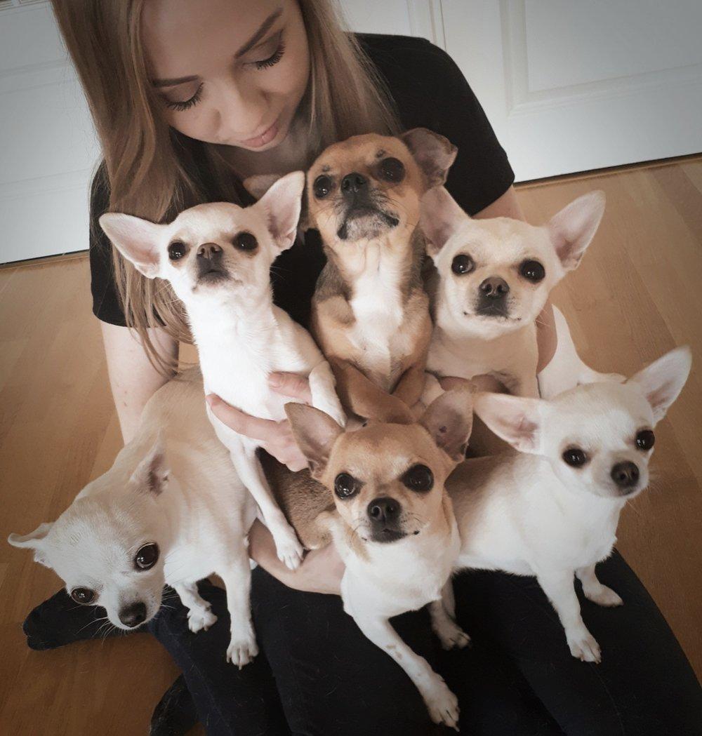 Kiia - Olen Kiia,22-vuotias koiraharrastaja ja Helsingin yliopiston kotieläintieteiden opiskelija.Eläimet ovat kuuluneet elämääni pikkutytöstä asti, ja tällä hetkellä talutushihnoja solmuun pyörittää kuusi ihanaa chihuahuaa. Omien koirien kanssa on harrastettu aina paljon, erityisesti näyttelyitä, agilitya ja rally-tokoa, niin harraste-kuin kilpatasollakin. Niiden lisäksi rennosti esimerkiksi doboillaan ja treenataan hauskoja temppuja varioiden esimerkiksi koiratanssia ja muita harrastuslajeja, ja etenkin ensimmäinen chihuahuani osaakin pelkästään eri temppukäskyjä kymmenittäin erilaisia.Kaksi chihuahuapentuetta olen myös kasvattanut maailmalle omalla kennelnimelläni, joten etenkin pikkukoirat ovatkin erittäin tutuiksi tulleet tässä vuosien aikana.Olen jo todella pitkään ollut erittäin kiinnostunut eläinten ruokinnan vaikutuksista niiden hyvinvointiin. Siksi hakeuduin opiskelemaan Helsingin yliopistoon kotieläintieteitä kaksi vuotta sitten, ja olenkin nyt suuntautumassa ja erikoistumassa omissa opinnoissani eläinten ravitsemukseen.Eläinten kouluttamisen kanssa olen noudattanut periaatetta, että liian vakavasti ei mukavaa yhdessätekemistä tarvitse aina ottaa. Stressiä vähentämällä ja positiivisella vahvistamisella edetään määrätietoisesti ja tehokkaasti siihen lopputulokseen johon halutaan - mutta otetaan ilo irti matkasta sinne.
