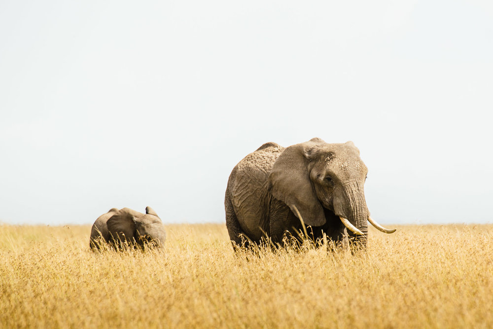 tanzania-africa-travel-photos-adventure-safari-3.jpg