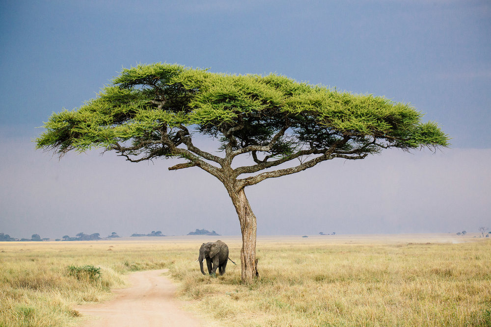 tanzania-africa-travel-photos-adventure-safari-6.jpg
