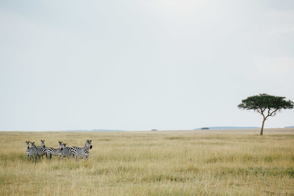 tanzania-africa-travel-photos-adventure-safari-5.jpg