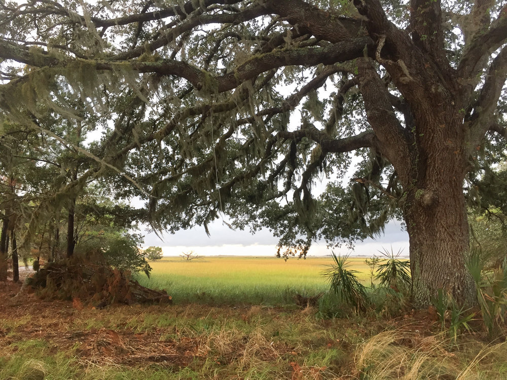 Live Oak and saltwater marsh - Photo by Mary Lou Dickson