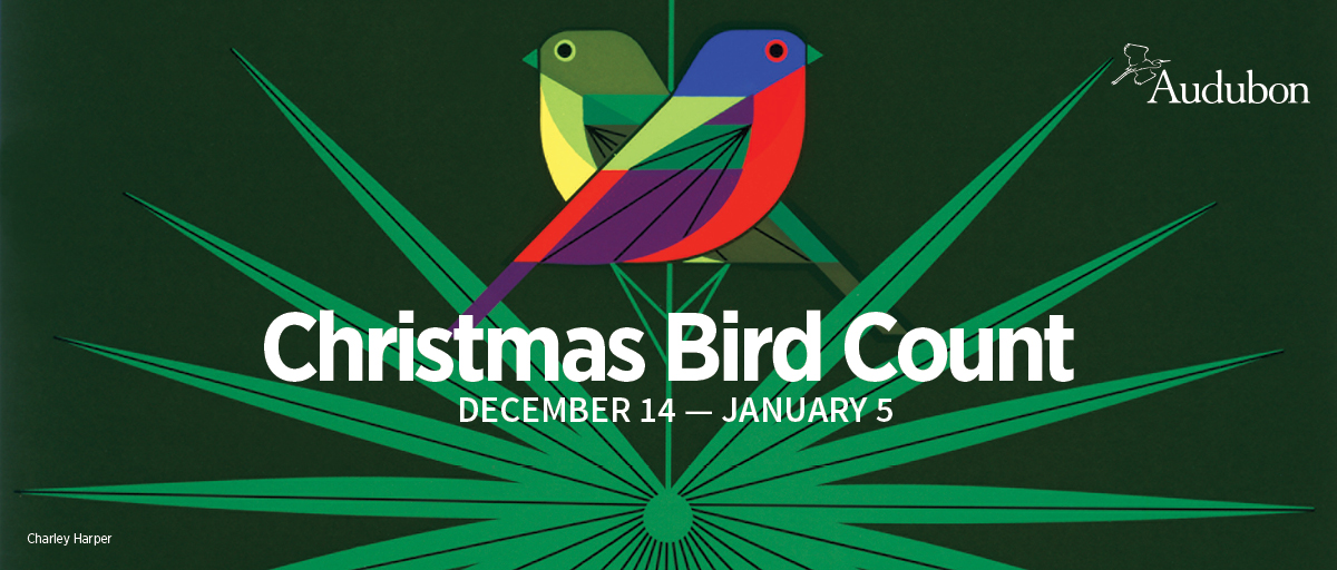Image result for christmas bird count 2019
