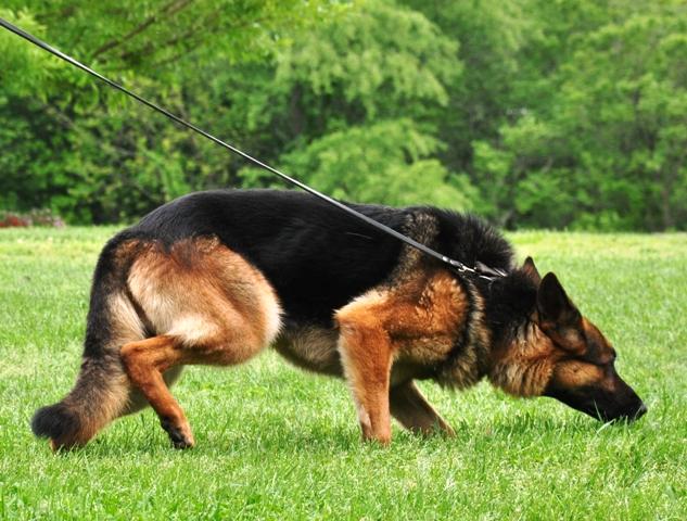 tracking-dog.jpg