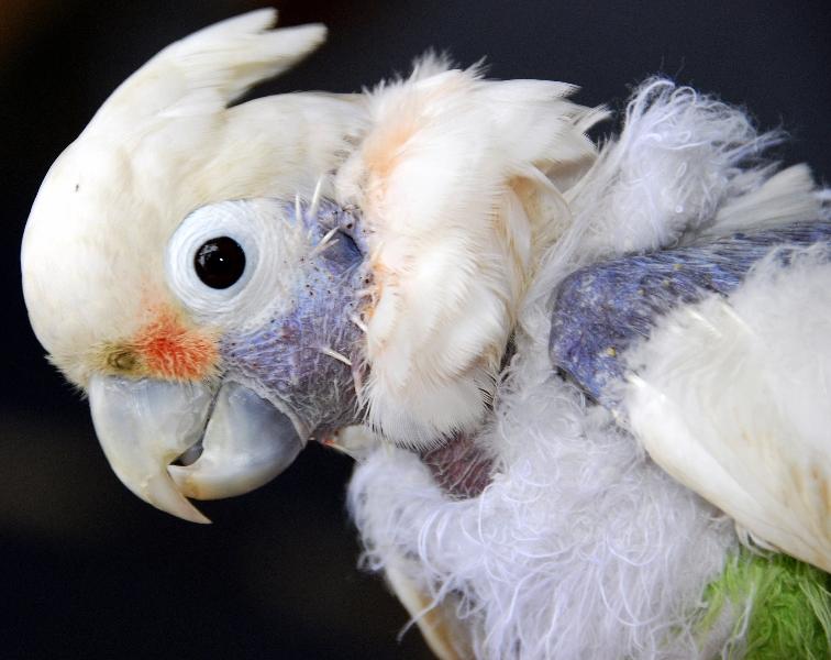 parrotMain.jpg