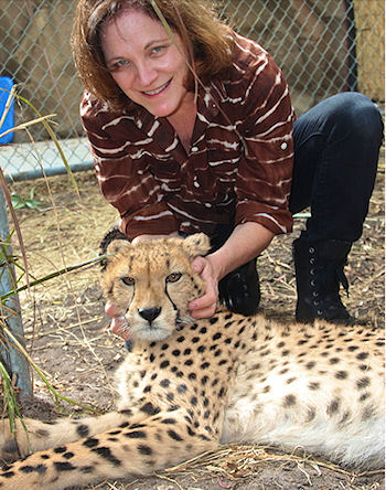 Meeting a cheetah behind-the-scenes at a zoo