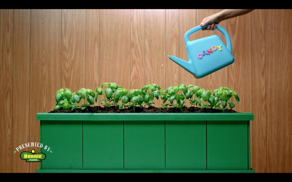 Bonnie Plants - Candy