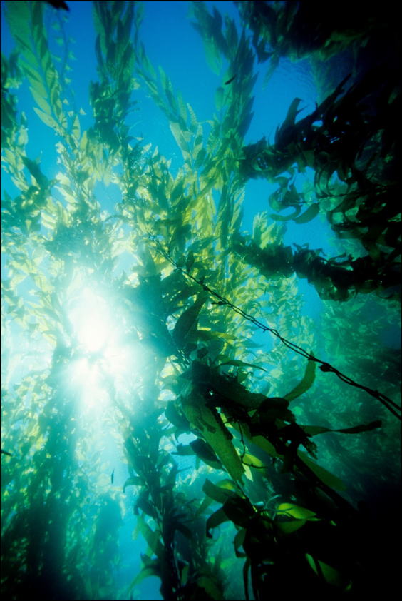 The Pacific's  ecosystem is diverse and ecologically important. It is our source for food, medicine,  alternative energy… and oxygen.